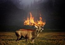 Из-за грозы случилось два лесных пожара в Кировской области