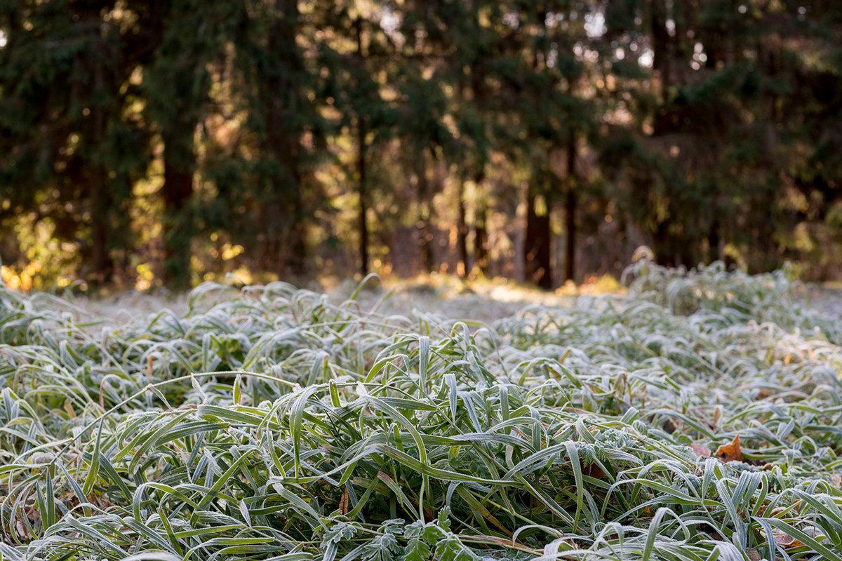В последний день весны в Костромской области был заморозок, но лето скоро свое возьмет