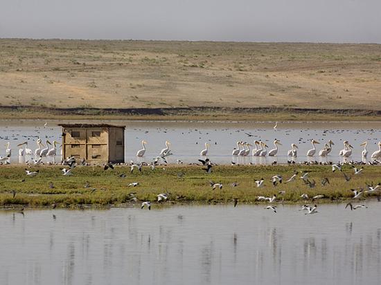 В Калмыкии мелеет озеро Маныч-Гудило с краснокнижными птицами