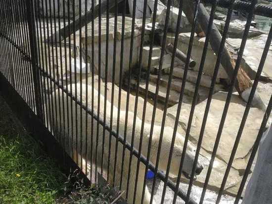 В зоосаде под Хабаровском скончался белый медведь Хабар