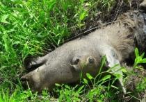 Найденный труп лося в Калуге проверяют на сибирскую язву