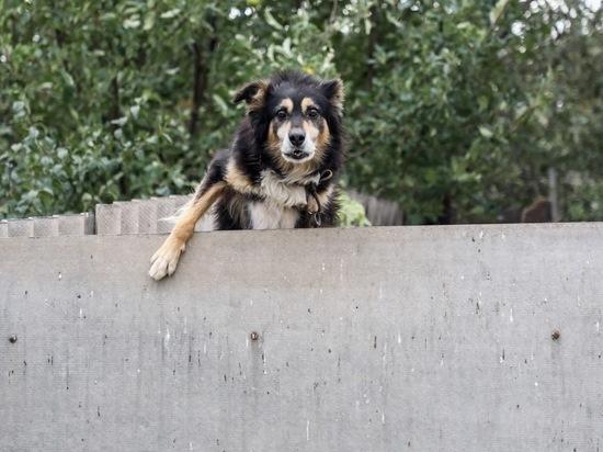 В Волгоградской области пенсионерка умерла после укуса бешеной собаки