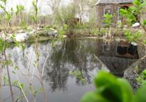 Корреспондент «МК в Хабаровске» побеседовал с владелицей дачного участка с прудом на его территории и выяснил основные моменты по уходу за водоемом