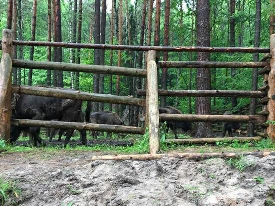 Серпуховских зубров выпустили в дикую природу