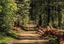 Регионы СКФО в числе 18 субъектов РФ выполнили план по лесу