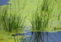 В Челябинске в июне начнутся работы по очистке реки Миасс