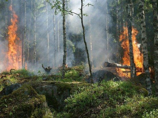 В Кировской области из-за халатности властей сгорело 17 гектар леса