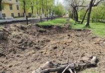 Прокуратура Читы не нашла оснований для реакции на вырубку в аллее Горького