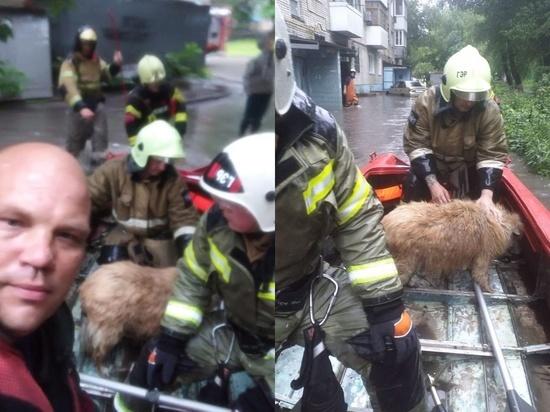 В Ростове в затопленной девятиэтажке едва не погибла собака