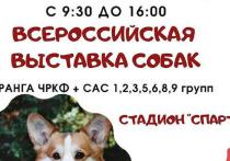 Конкурс собачьей красоты пройдёт в Серпухове