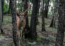 Охотиться в Приморье будут по новым параметрам