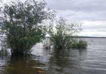 Уровень Амура у Хабаровска 3-4 июня спадет на 30-40 сантиметров