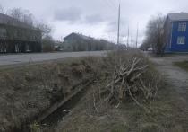 «Песок летит в лицо»: вырубка деревьев на Маяковского возмутила жителей Салехарда