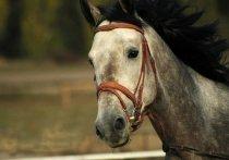 В Белоярском появился конный клуб для детей с ОВЗ