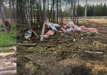 На Шиесе начались работы по лесовосстановлению