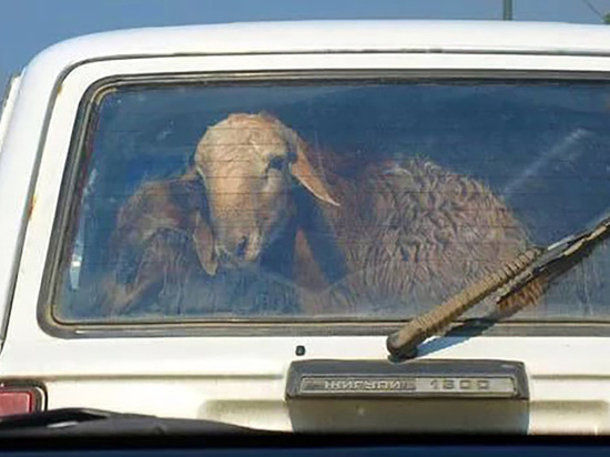 Трупы животных были обнаружены на обочине дороги недалеко от посёлка Динамо под Архангельском.