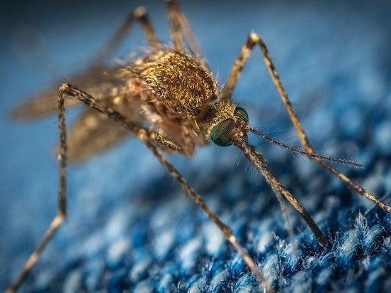 Нашествие комаров ожидается этим летом в Барнауле