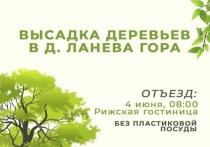 Псковичей приглашают принять участие в высадке деревьев