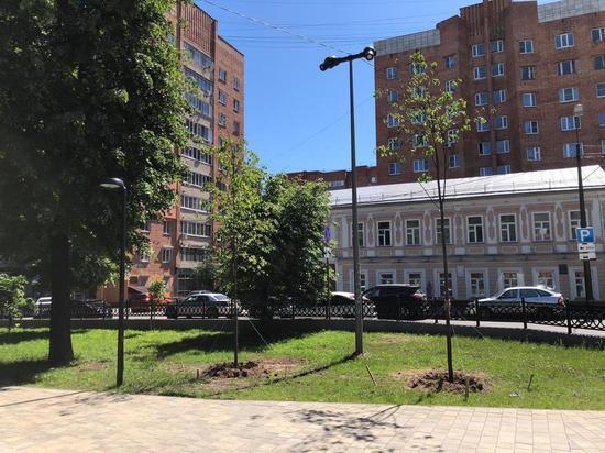 Пятнадцать лип высадили в сквере на Звездинке в Нижнем Новгороде