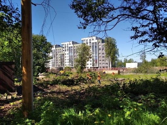 Петрозаводчане обеспокоены вырубкой деревьев у Республиканской инфекционной больницы