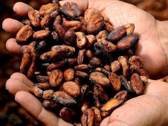 Какао оказался эффективен при борьбе с заболеваниями сердца и мозга