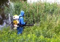 Опубликован список водоемов, которые обработают от личинок комаров в Рязани