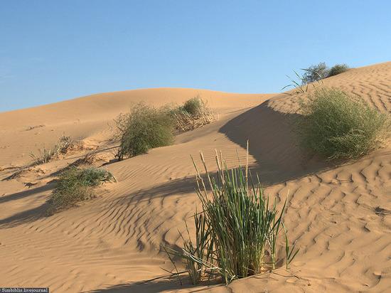 Калмыцкие ученые научились останавливать пыльные бури