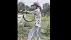 Жительница Вьетнама поймала голыми руками гигантскую змею: видео