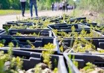 29 тысяч саженцев в рамках проектам «Зелёная область» высадили под Псковом