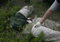 Камчатские браконьеры попадаются в сети силовиков ежедневно