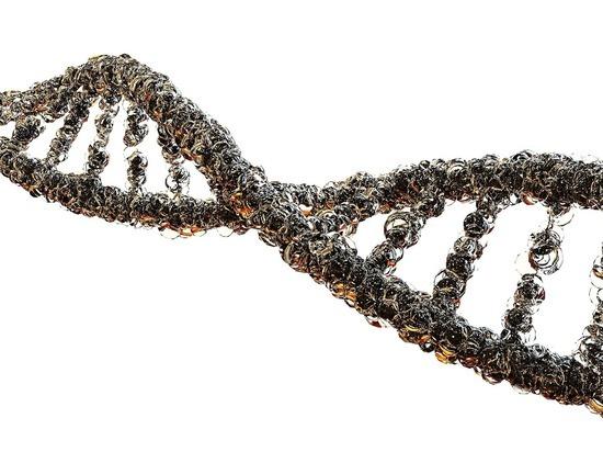 Человеческий геном полностью расшифровали: в каждой клетке по 3 миллиарда «букв»