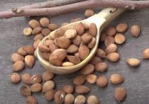 Косточки некоторых фруктов содержат синильную кислоту, которая способна вызвать сильнейшее отравление, заявил доктор Мухаммед Ихаб Фуад из отдела биологии Национального исследовательского центра в Египте, сообщает Al Arabiya