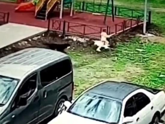 Агрессивная собака напала на ребенка в Приморье