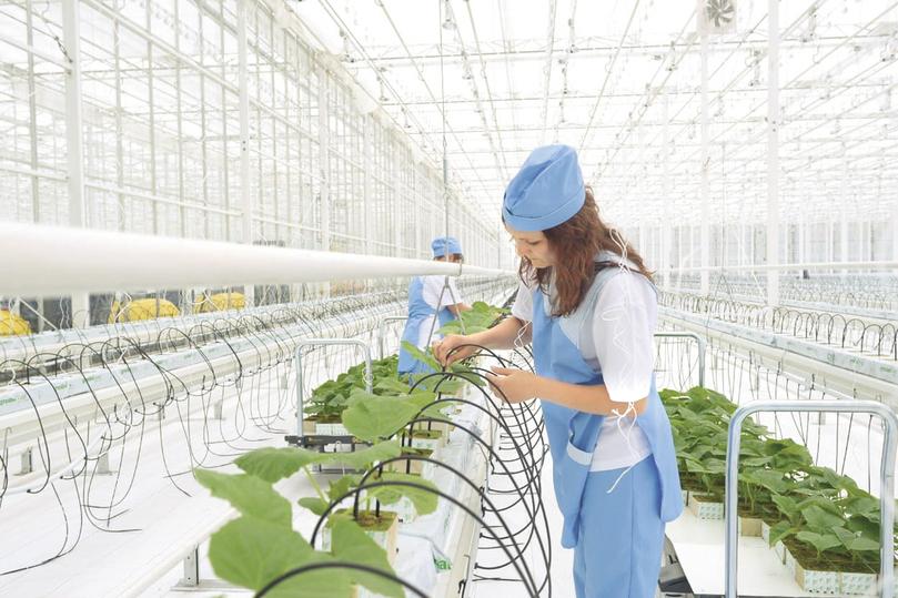 Новые инвестиции — новые рабочие места для людей