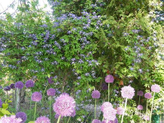 Эксперт-садовод рекомендует сажать лиану из лондонских королевских садов