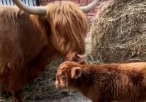 В зоопарке Калуги родился очередной малыш