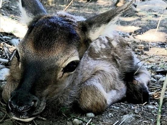 Мэр Невинномысска показал новорожденного олененка в зоопарке