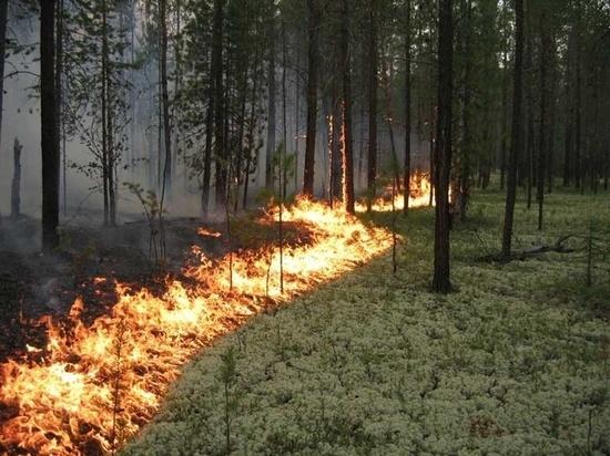 В выходные в Марий Эл дважды горели леса