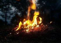 Единственный лесной пожар в Югре находится под контролем