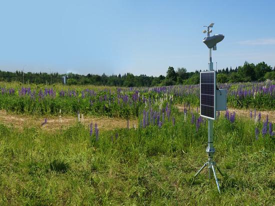 В Ботаническом саду МГУ появилась метеостанция, которая подскажет время полива растений
