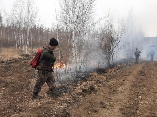 Лесной пожар на Молоковке локализован на территории около 400 га