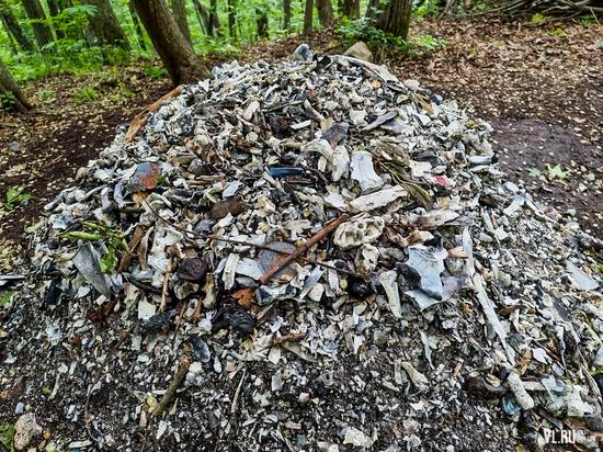"""""""Кто-то убивает и ест животных"""": страшную находку в лесу обсуждает Владивосток"""