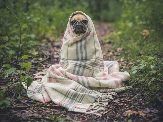 В соцсетях обсуждают массовое заболевание собак после прогулки в барнаульском парке