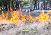 В Челябинске пожарные выезжали на места возгорания тополиного пуха более 100 раз