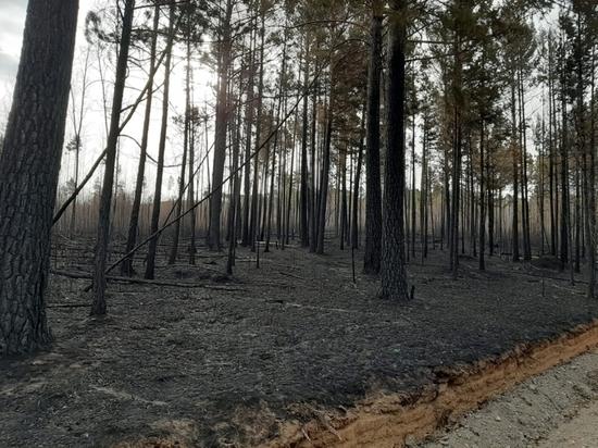 Потушен пожар, выжегший около 400 га леса на Молоковке