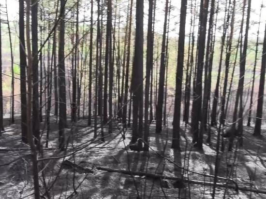 Уголовное дело возбуждено после пожара в лесу на Молоковке в Чите