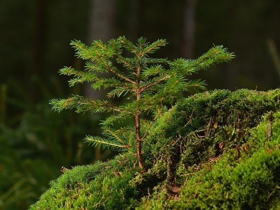 В Бурятии продолжают мероприятия по восстановлению погибших лесов