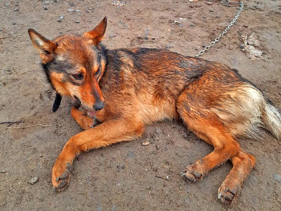 В Волгограде обездоленные собаки ждут заботливых хозяев