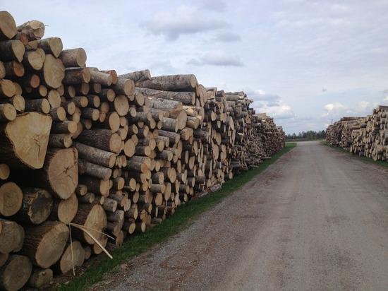 Контрабанду леса в Китай на 600 млн рублей выявили в Забайкалье