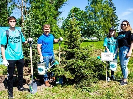 Дмитрий Павлов с волонтерами посадил деревья у монумента «Ополченцы»